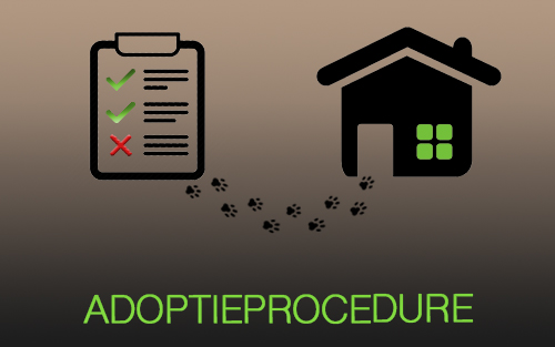 Adoptie Procedure