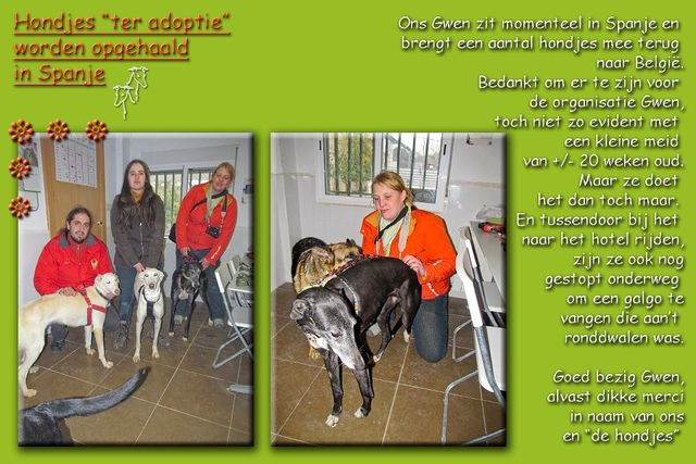 GalgoAid-FEB2013-Gwen-32